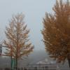 夜久野宝山公園の雲海に行ってきました!!そこで見る景色は・・・